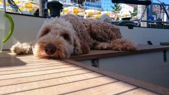 Bootsmann Barney auf Wache